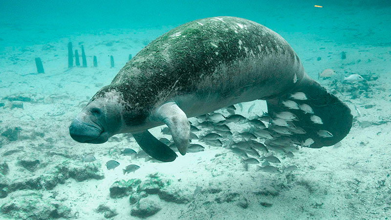 Porto das Pedras Maragogi - Projeto Peixe-Boi